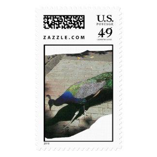Pavo real sello