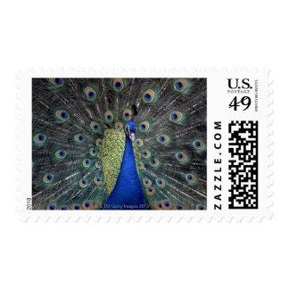 Pavo real sellos postales