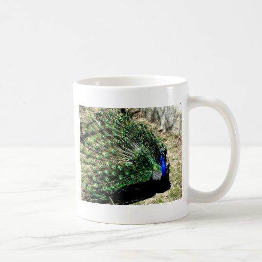 Pavo real taza de café