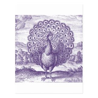Pavo real, un grabado del vintage postal