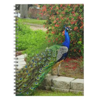 Pavo real y cuaderno preciosos de las flores