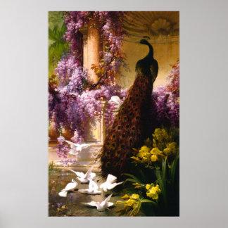 Pavo real y palomas en un jardín poster