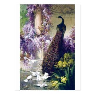 Pavo real y pintura blanca de los pájaros de las postales