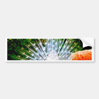 pavos reales blancos holandeses y belleza etiqueta de parachoque