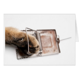 Paw in mousetrap card