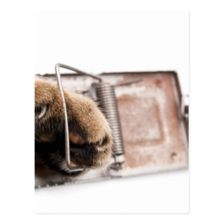 Paw in mousetrap postcard