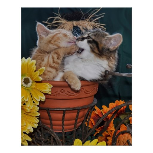 Paw in Mouth, Cute Kitty Cat Playing with Kitten Poster