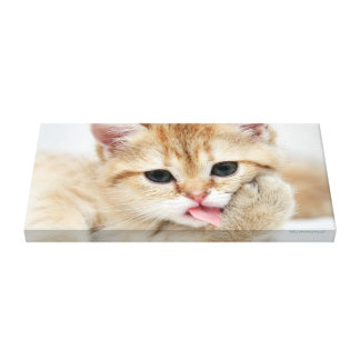 Paw Licking Kitty Canvas Print