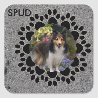 Paw Prints and Photo Square Sticker
