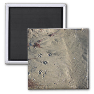 paw prints in the sand 2 inch square magnet