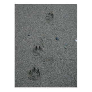 Paw Prints in the Sand Post Cards