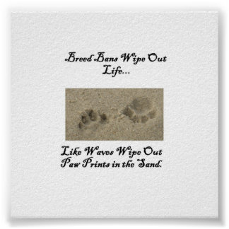 Paw Prints in the Sand Poster
