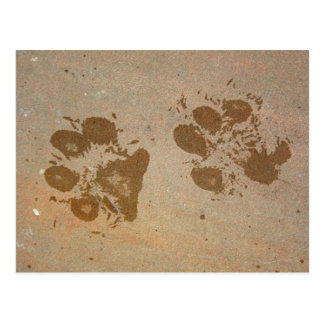 Paw Prints Postcards