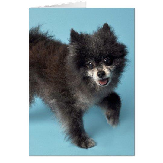 Paw Puppy Card