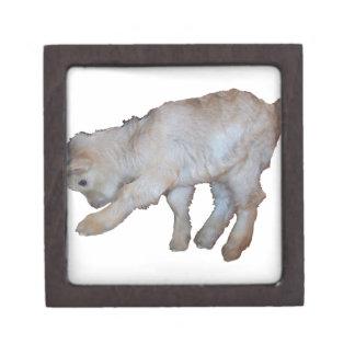 Pawing Tan Baby Goat Keepsake Box