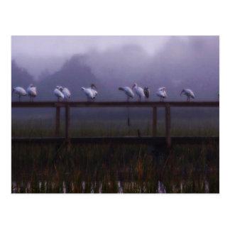 Pawleys Island Foggy Morning Post Card