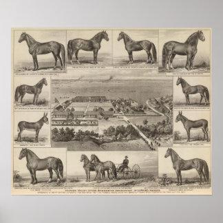 Pawnee Valley Stock Breeders' Association, Kansas Poster