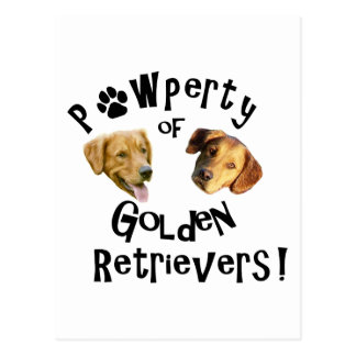 Pawperty (Property) of Golden Retrievers! Postcard