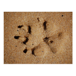 Pawprints in the Sand Postcard
