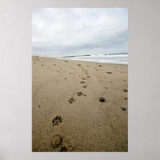 Pawprints Poster