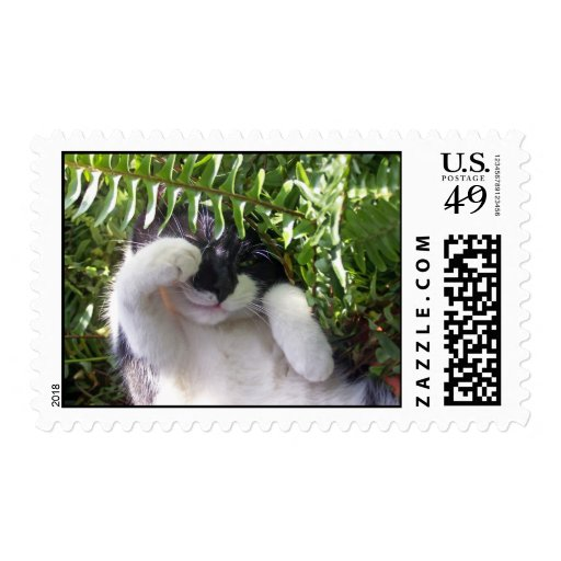 Paws Among the Ferns Postage Stamp