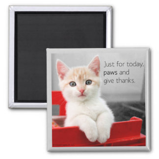 Paws and give thanks magnet