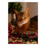 Paws For The Holidays Cards