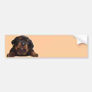 Paws For Thought Bumper Sticker