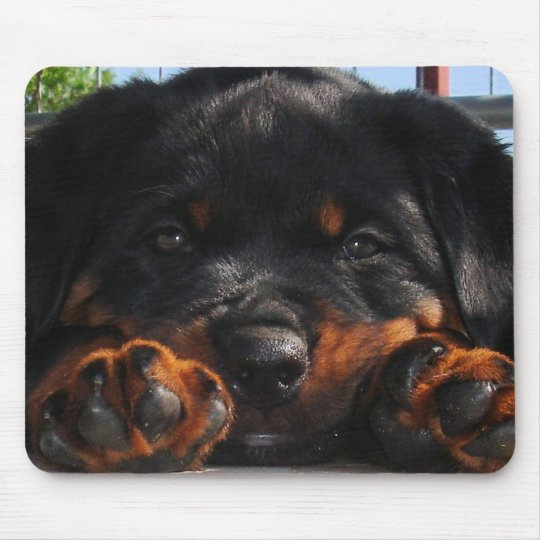 Paws For Thought Mouse Pad