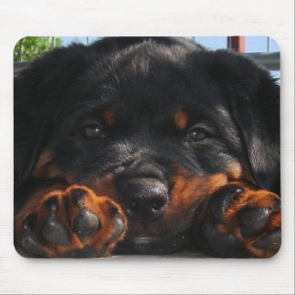 Paws For Thought Mouse Pads