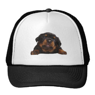 Paws For Thought Trucker Hat