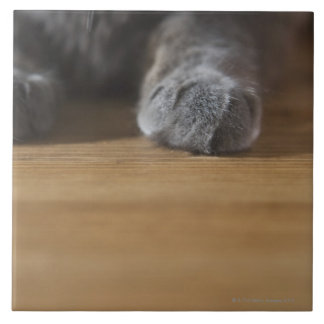 Paws of cat tile