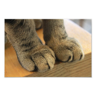 paws photo print