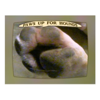 Paws Up for Hound Dogs Post Cards