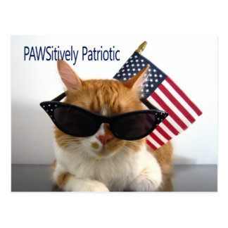 PAWSitively Patriotic Cat Postcard