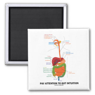 Pay Attention To Gut Intuition (Digestive System) Magnet