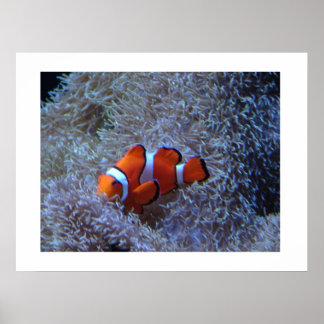 Payaso en el coral póster