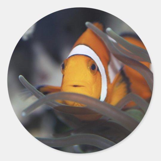 Payaso-pescados en anémona pegatina redonda