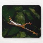 Payaso Treefrog, leucophylatta del Hyla, nativo a Alfombrillas De Raton