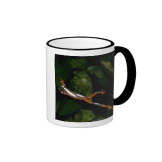 Payaso Treefrog, leucophylatta del Hyla, nativo a Taza De Dos Colores