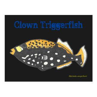 Payaso Triggerfish Tarjetas Postales