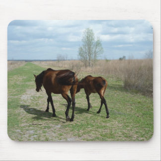 Payne's Prairie Wild Horses Photo Mousepad Florida