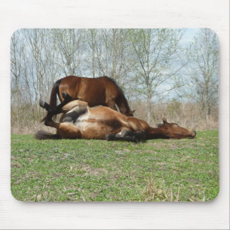 Payne's Prarie Wild Horses Photo Mousepad Florida