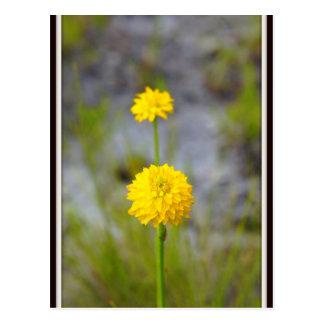 Paynes Wildflower Postcard