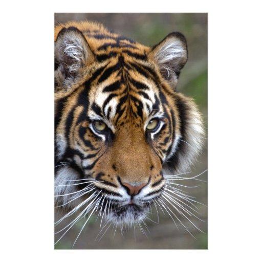 Paz de la confianza del poder y tigre tranquilo de papeleria de diseño