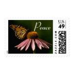 Paz de las flores 22 envio