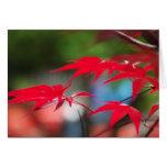 Paz de las hojas tarjeta pequeña