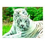 Paz del amor y stukenbrock blanco de los tigres de postales