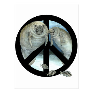 paz del manatee tarjetas postales