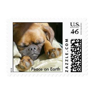 Paz en la tierra